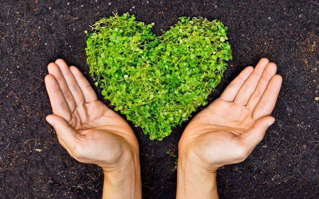 Ecologisch verantwoord ondernemen: hoe bedrijven duurzamer worden in 2021